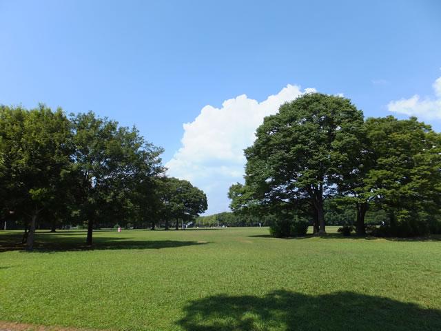 大泉 緑地